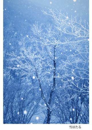 07 雪ほたる