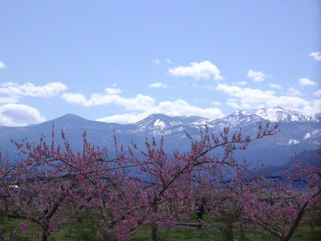 吾妻連峰の残雪と桃の花