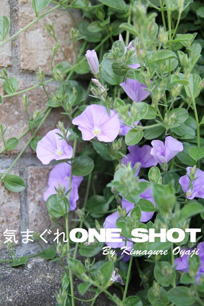 EOS 7D_kimagure_29696