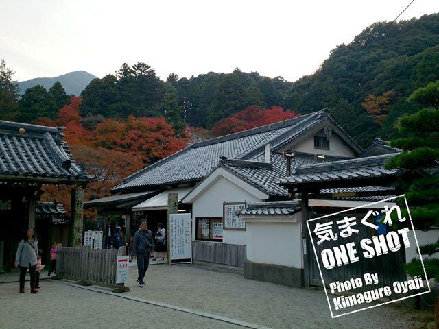 DSC_kimagure_0323.jpg