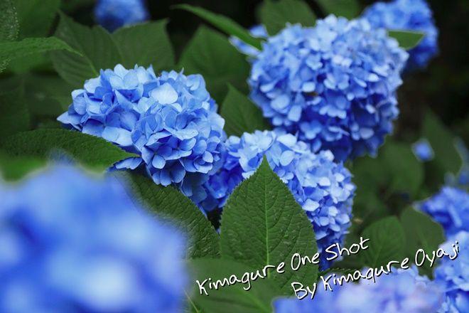 EOS 5D Mark III_kimagure_01050