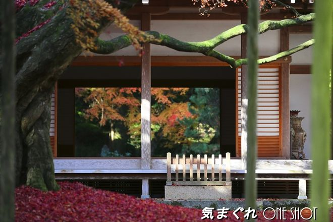 EOS 5D Mark III_kimagure_04916