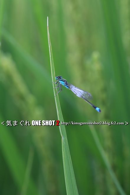 EOS 5D Mark III_kimagure_09455