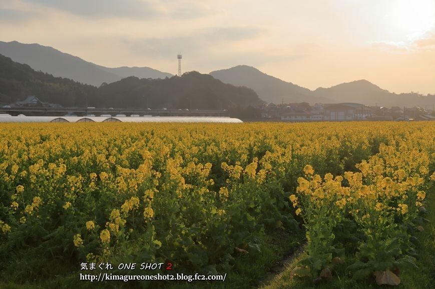 kimagure_5D3_14339_R.jpg