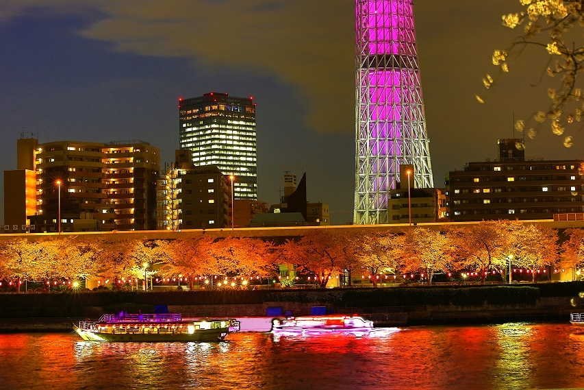 隅田川の夜桜