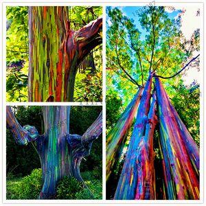 美しいガーデン植物虹ユーカリ
