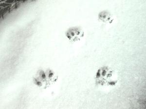 猫雪あしあと