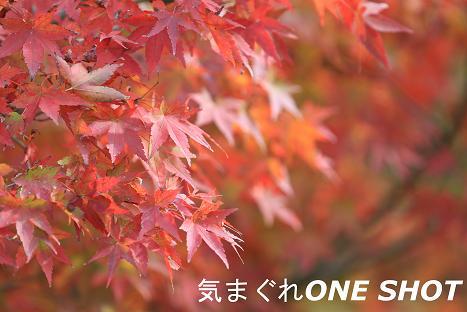 IMG_4829-a.jpg