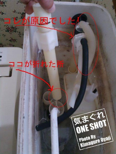 DSC_kimagure_0001_1.jpg