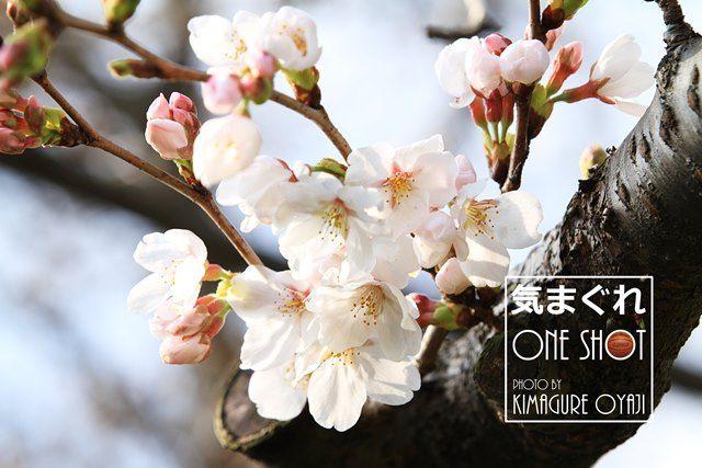 EOS 7D_kimagure_38810