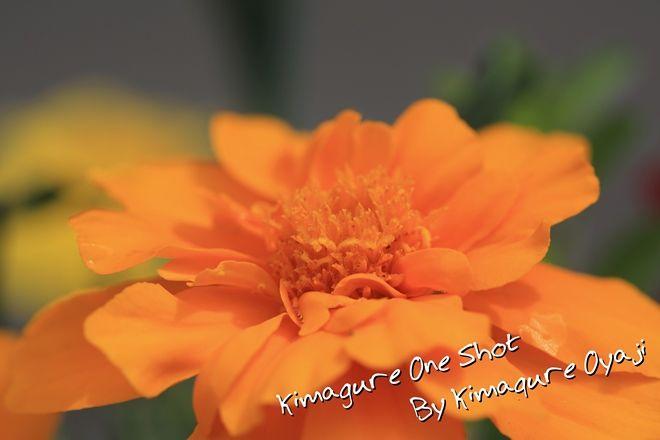 EOS 5D Mark III_kimagure_00959