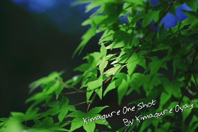EOS 5D Mark III_kimagure_00952