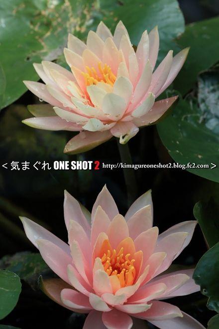EOS 5D Mark III_kimagure_08505