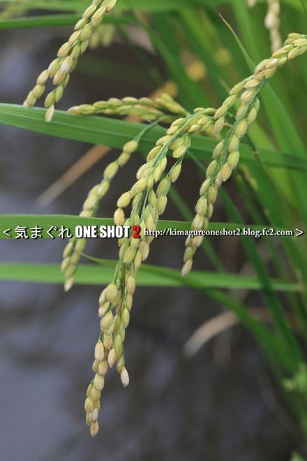 EOS 5D Mark III_kimagure_09448